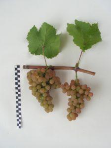 Платовский- гроздь